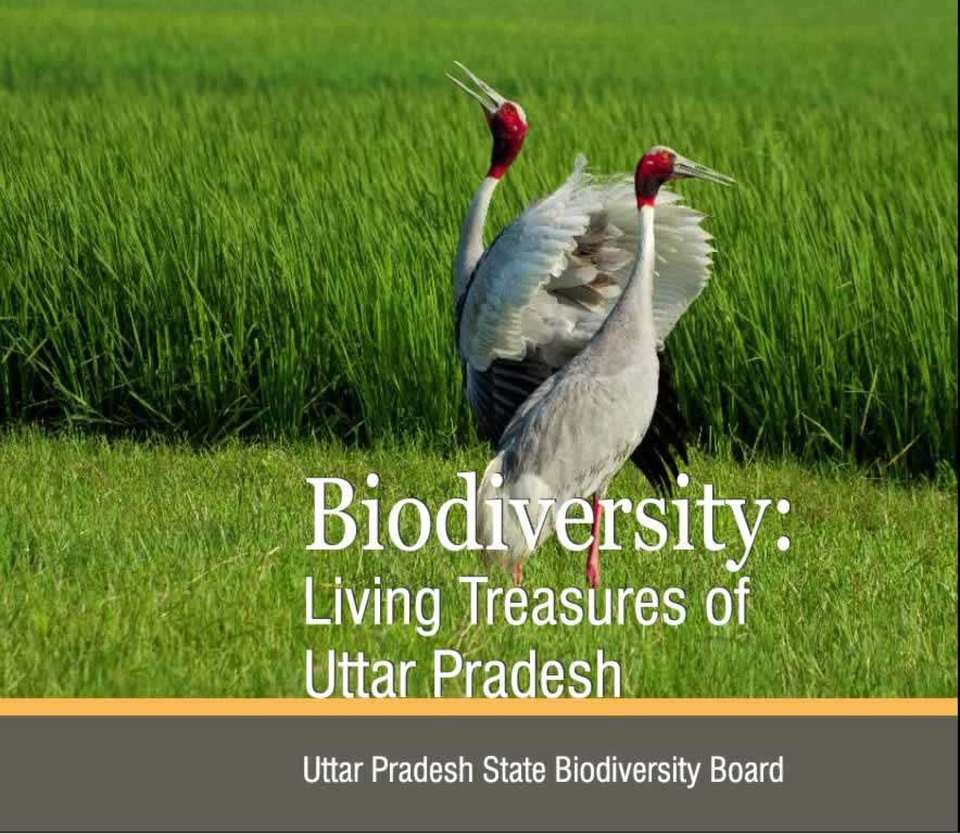 Biodiversity (Living Treasures of Uttar Pradsh)