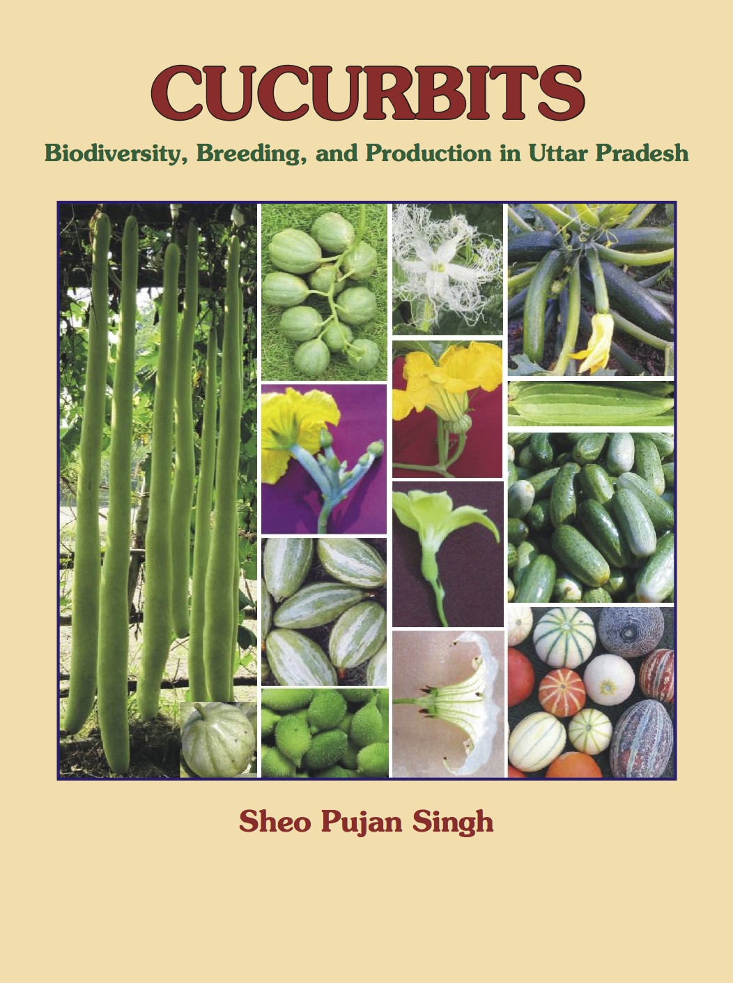 Curcurbits -Biodiversity, Breeding, and Production in Uttar Pradesh